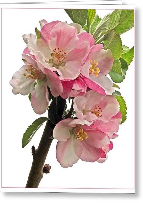 Garden Petal Image Greeting Cards - Apple Blossom Vertical Greeting Card by Gill Billington
