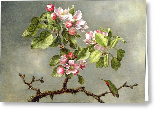 Red Claws Greeting Cards - Apple Blossoms and a Hummingbird Greeting Card by Martin Johnson Heade