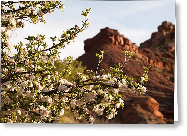 Geobob Greeting Cards - Apple Blossoms and Spring in the Desert Rockville Utah Greeting Card by Robert Ford