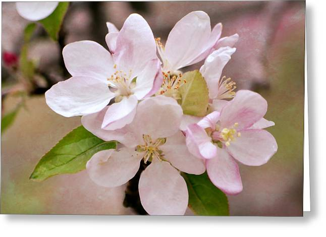 Arkansas Greeting Cards - Apple Blossoms Greeting Card by Deena Stoddard