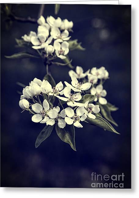Texture Flower Greeting Cards - Apple Blossoms Greeting Card by Edward Fielding