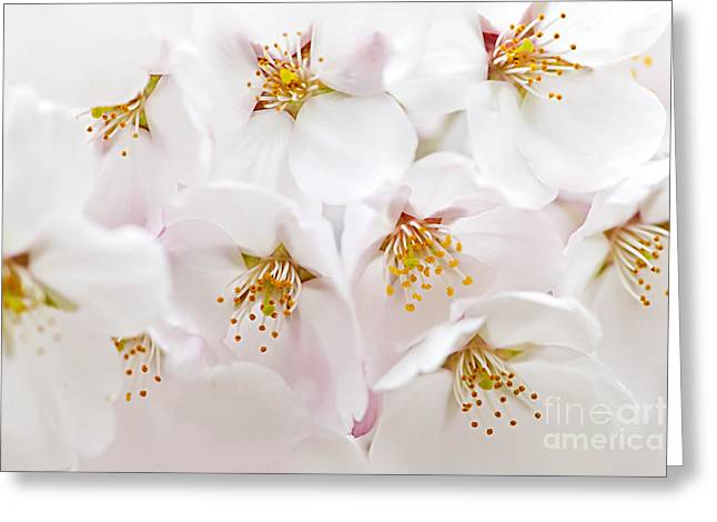 Flowering Greeting Cards - Apple blossoms Greeting Card by Elena Elisseeva