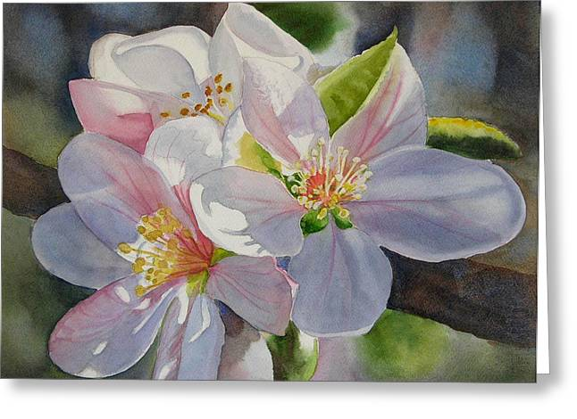 Apple Tree Greeting Cards - Apple Blossoms in Sunlight Greeting Card by Sharon Freeman
