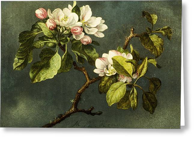 In Bloom Greeting Cards - Apple Blossoms Greeting Card by Martin Johnson Heade