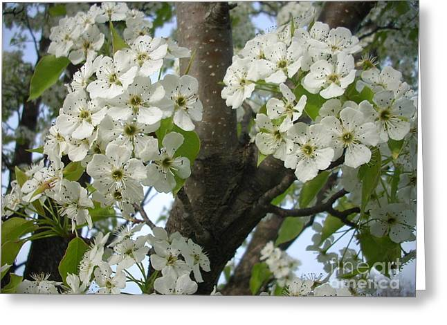 Randi Shenkman Greeting Cards - Apple Blossoms Greeting Card by Randi Shenkman