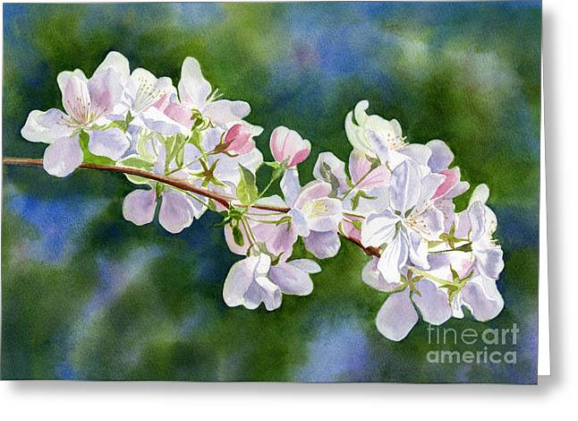 Apple Blossom Paintings Greeting Cards - Apple Blossoms with Blue Green Background Greeting Card by Sharon Freeman