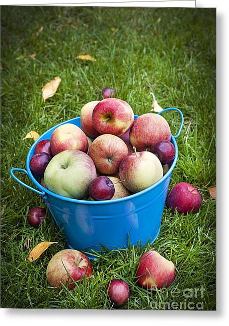 Healthy Greeting Cards - Apple harvest Greeting Card by Elena Elisseeva
