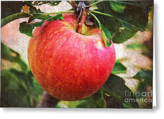 Fruit Tree Art Greeting Cards - Apple On The Tree Greeting Card by Andee Design