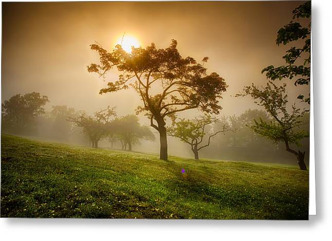 40mm Greeting Cards - Apple Orchard in Fog  Greeting Card by Jakub Sisak