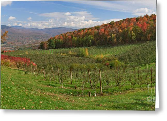 Charles Kozierok Greeting Cards - Apple Orchard Panorama Greeting Card by Charles Kozierok