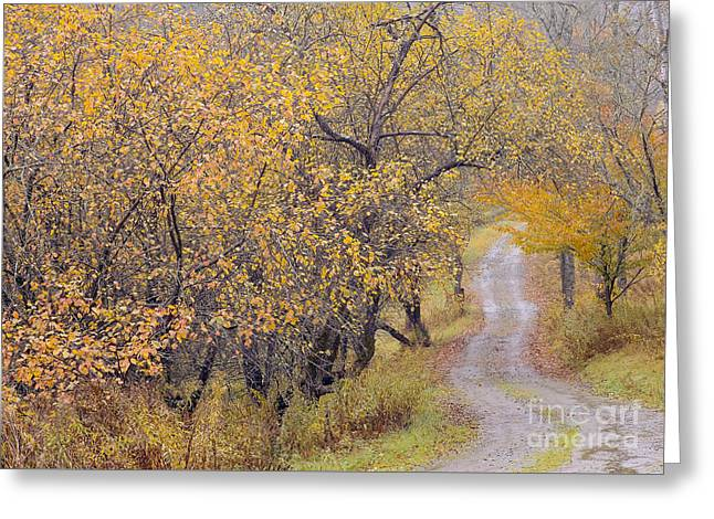 Apple Orchard Road Greeting Card by Alan L Graham