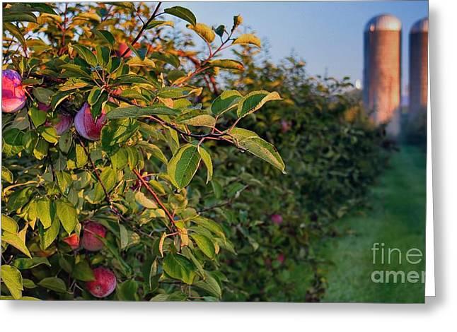 Apple Orchard Sunrise Autumn Greeting Card by Henry Kowalski