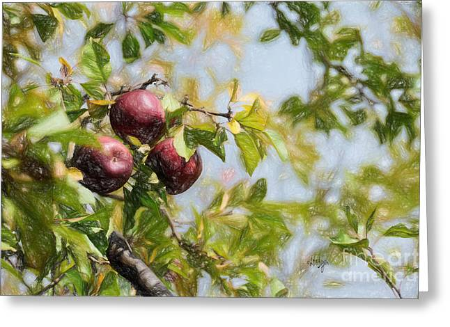 Harvest Time Greeting Cards - Apple Pickin time Greeting Card by Lois Bryan