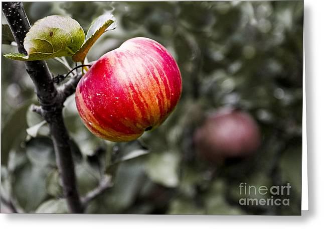 Apple Greeting Card by Steven Ralser