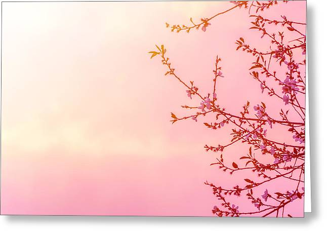 Apple Art Greeting Cards - Apple tree blossom on pink sunset Greeting Card by Anna Omelchenko