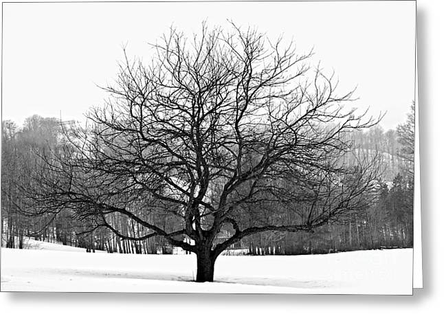 Black And White Nature Landscapes Greeting Cards - Apple tree in winter Greeting Card by Elena Elisseeva