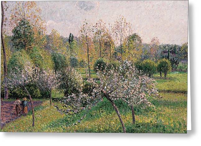 Apple Tree Greeting Cards - Apple Trees in Blossom Greeting Card by Camille Pissarro