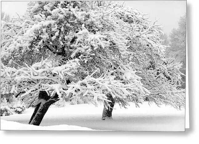 Snow-covered Landscape Greeting Cards - Apple Trees In The Snow Greeting Card by Patricia Sundik