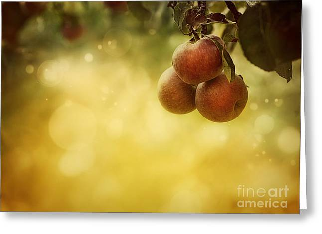 Apples Background Greeting Card by Mythja  Photography