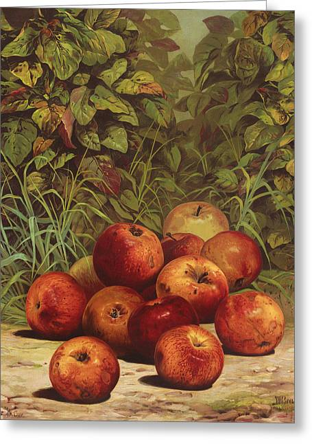 Fresh Green Drawings Greeting Cards - Apples Circa 1868 Greeting Card by Aged Pixel