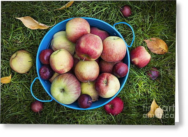 Healthy Greeting Cards - Apples Greeting Card by Elena Elisseeva