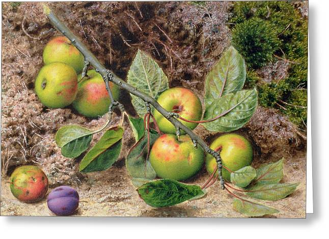 Victoria Greeting Cards - Apples On A Branch Greeting Card by John Sherrin