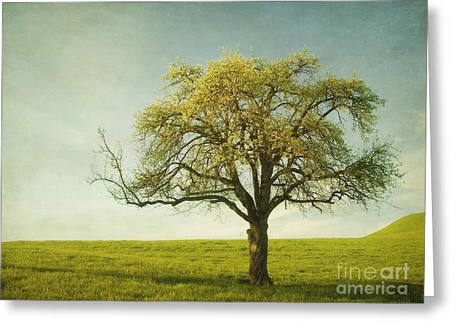 Meadow Photographs Greeting Cards - Appletree Greeting Card by Priska Wettstein