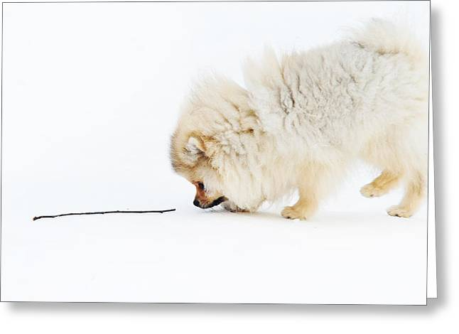 White Thick Fur Greeting Cards - Apport Greeting Card by Jenny Rainbow