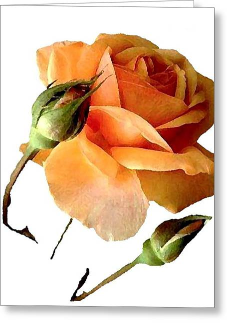 Apricot Digital Art Greeting Cards - Apricot Delight J6794 Greeting Card by Jill Walton