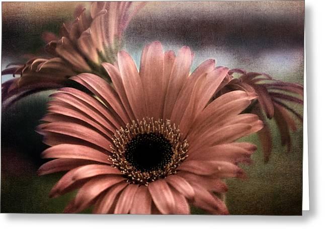 Apricot Greeting Cards - Apricot Dreams Greeting Card by Darlene Kwiatkowski