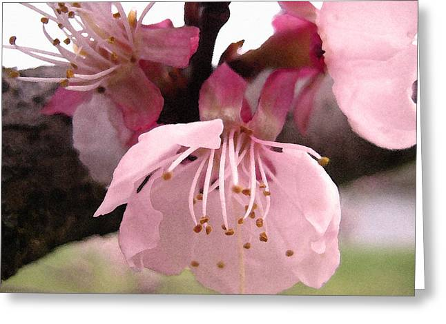Apricot Digital Art Greeting Cards - Apricot Spring Greeting Card by Kathy Bassett