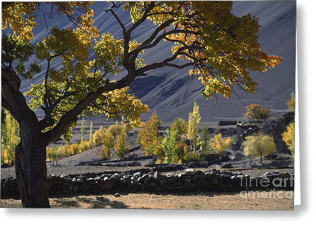 Indus Valley Greeting Cards - Apricot Tree Ladakh Greeting Card by Craig Lovell