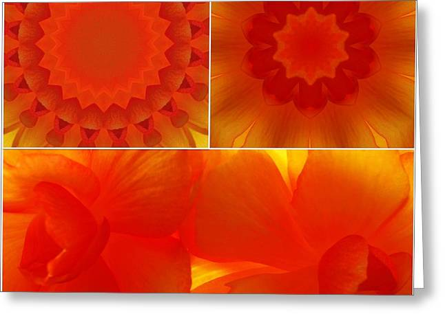 Apricot Digital Art Greeting Cards - Apricot...2 Greeting Card by Tom Druin