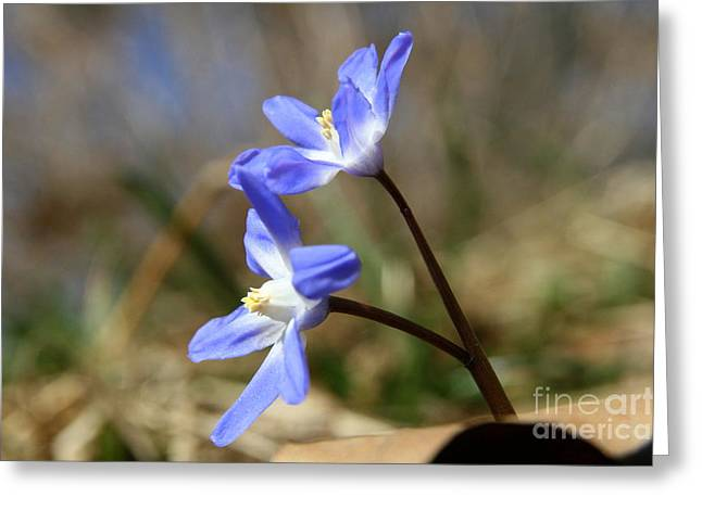 Wildflowers Greeting Cards - April Blues Greeting Card by Neal  Eslinger