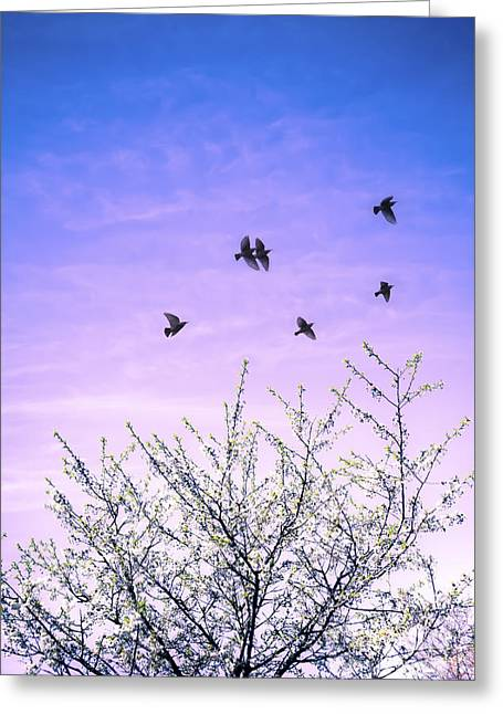 April Dawn Greeting Card by Jan Bickerton