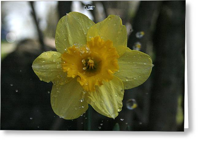 Kpl Greeting Cards - April Showers Greeting Card by Kathy Peltomaa Lewis