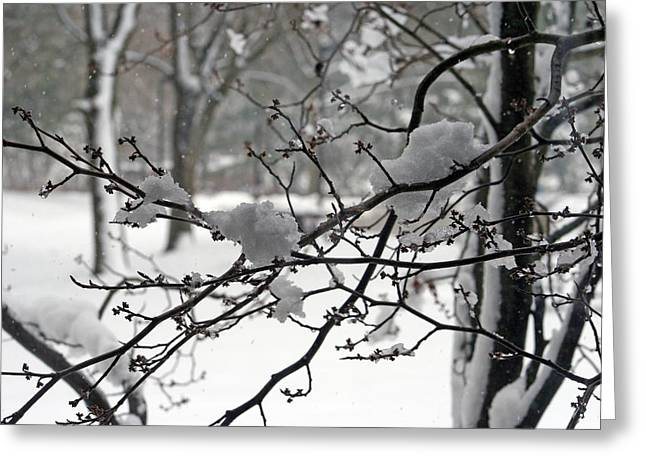 Winter Solstice Greeting Cards Greeting Cards - April Snow Greeting Card by Kay Novy