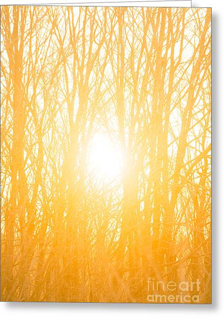 Sun Flare Greeting Cards - April Sunrise Greeting Card by Diane Diederich