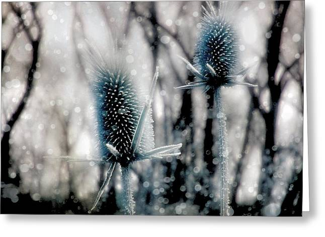 Winter Scene Digital Art Greeting Cards - Aqua Ice Greeting Card by Gothicolors Donna Snyder