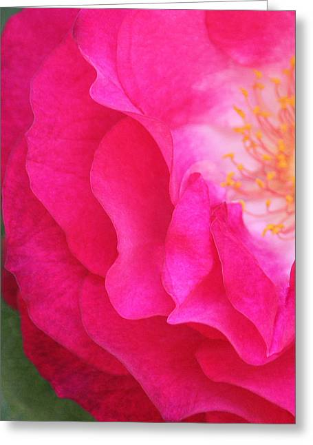 Rose Portrait Greeting Cards - Aquarella Greeting Card by  The Art Of Marilyn Ridoutt-Greene