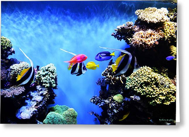 Snorkel Greeting Cards - Aquarium 1 Greeting Card by Barbara Snyder