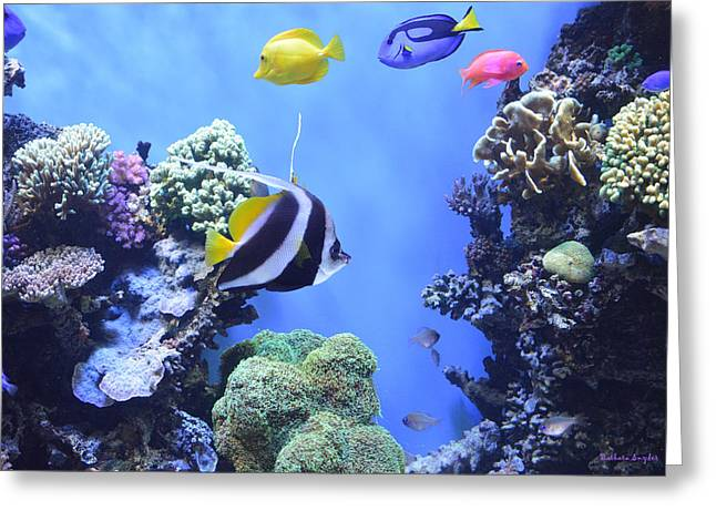 Snorkel Greeting Cards - Aquarium 3 Greeting Card by Barbara Snyder