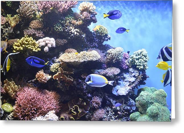 Pomacentridae Greeting Cards - Aquarium 4 Greeting Card by Barbara Snyder