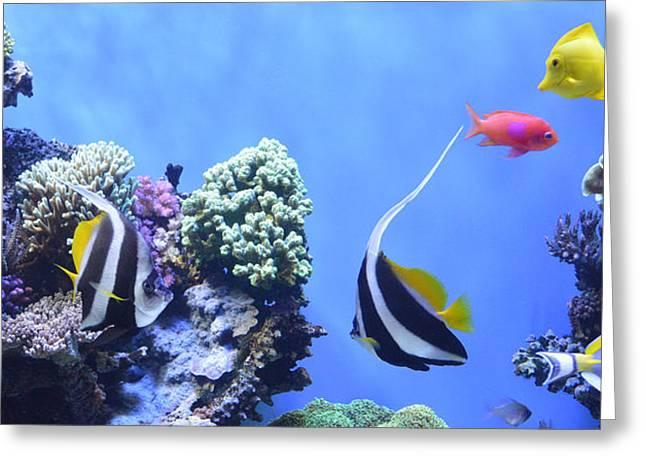 Pomacentridae Greeting Cards - Aquarium 5 Greeting Card by Barbara Snyder