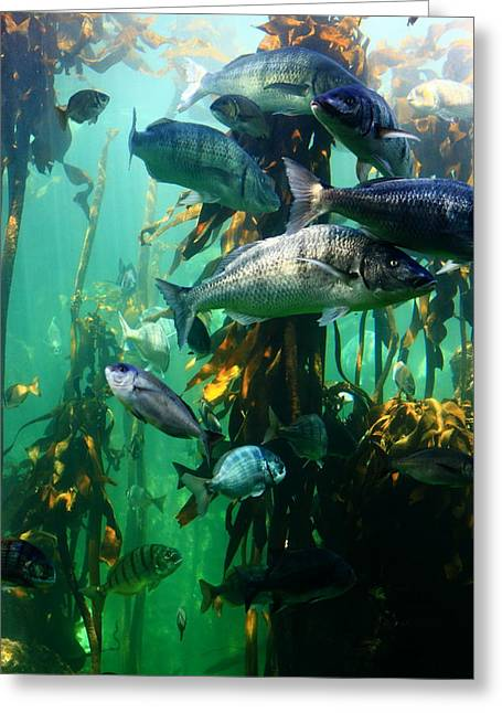 Aquarium Fish Greeting Cards - Aquarium Greeting Card by Aidan Moran