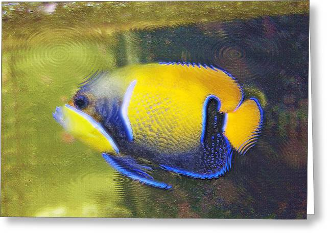 Artistic Fish Abstraction Greeting Cards - Aquarium Art 22 Greeting Card by Steve Ohlsen