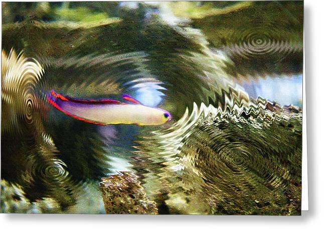 Aquarium Art 25 Greeting Card by Steve Ohlsen