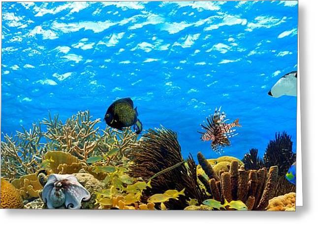 Aquarium Fish Greeting Cards - Aquarium Greeting Card by Isabelle Kuehn