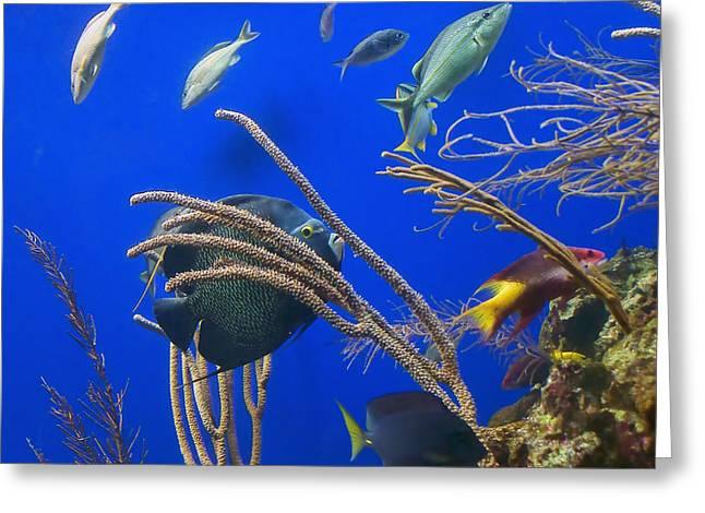 Aquarium Fish Greeting Cards - Aquarium Life #2 Greeting Card by Nikolyn McDonald
