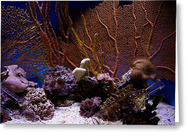 Ocean Images Greeting Cards - Aquarium Life Greeting Card by Ivete Basso Photography